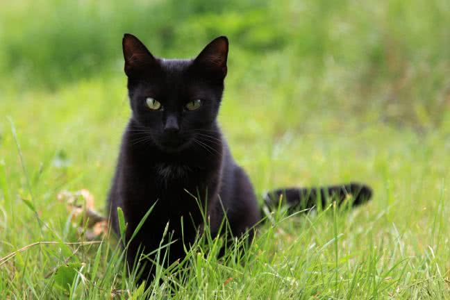 Black cat in the grass - free stock photo