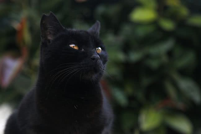 Black cat detail - free stock photo