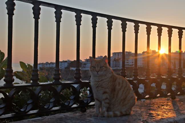 Cat and sunset in the background - free stock photo