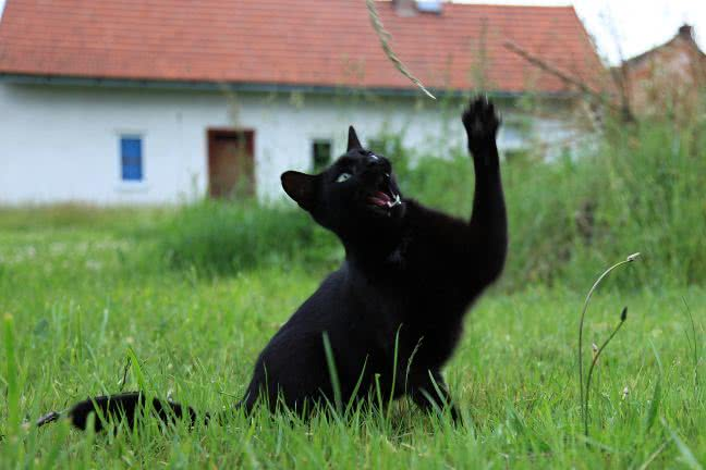 Cheerful black cat - free stock photo