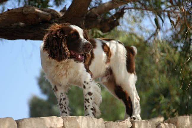 Dog on a wall - free stock photo