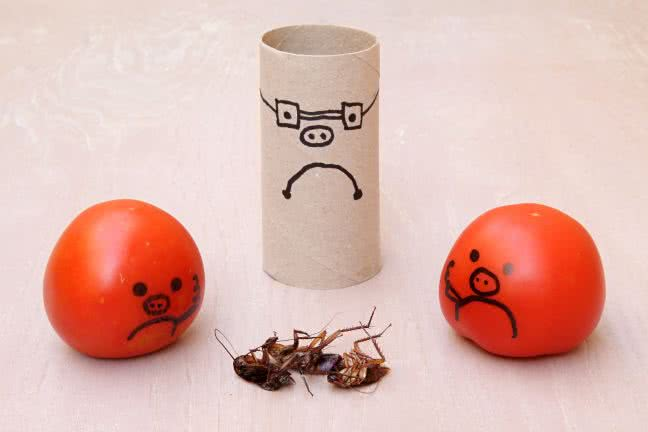 Dead roaches and sad smileys - free stock photo