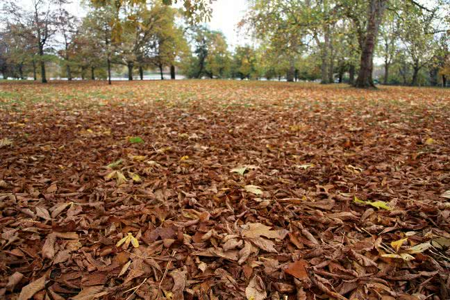 Hyde park in the autumn - free stock photo