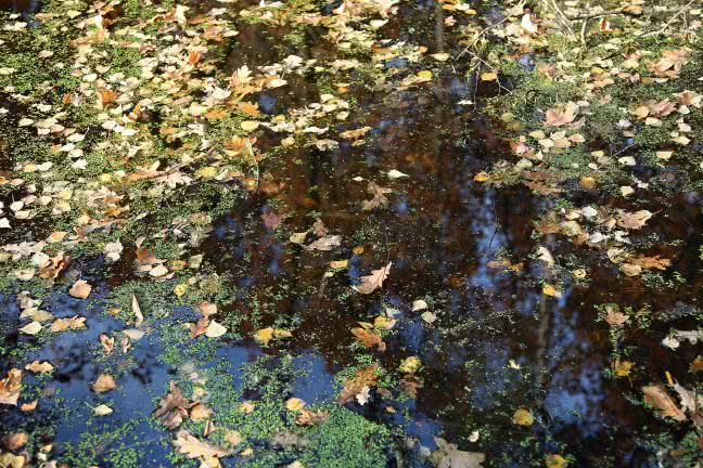 Leaves in a lake - free stock photo