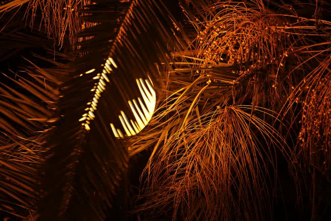 Palm detail at night - free stock photo