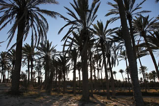 Palm grove in Torrevieja - free stock photo