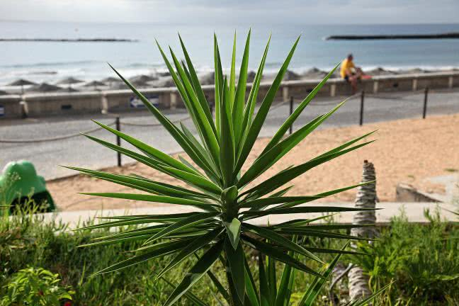 A plant in Tenerife island - free stock photo