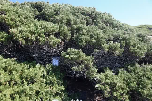 Sagres bushes - free stock photo