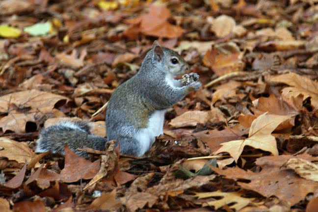 Squirrel eating a nut - free stock photo